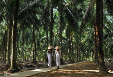 Ben Tre Mekong Co Co Nut Forest