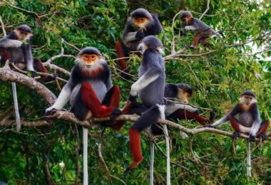 Cuc Phuong National Park Monkey