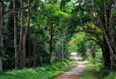 Cuc Phuong Park in Ninh Binh